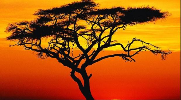 Nel biennio 2012-2013, l'Africa sub-sahariana sarà la seconda area a maggiore crescita del pianeta. Lo sviluppo dell'economia significa anche opportunità di investimento