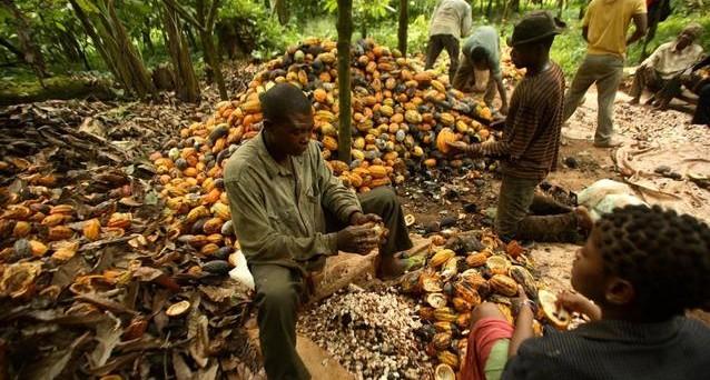 La crisi delle materie prime non si ferma e i prezzi delle principali scendono ai minimi dal 2002. Ma se oro e petrolio continuano a deludere, il cacao riserva soddisfazioni al mercato.
