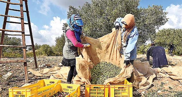 Altre 70.000 tonnellate di olio di oliva senza dazi in Europa, dopo la decisione del Parlamento di Strasburgo di aiutare l'economia del paese nordafricano.