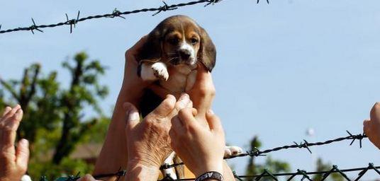 Il Parlamento vieta per legge l'allevamento di animali a scopo scientifico ma rimanda al governo il compito di indicare le sanzioni per i trasgressori.