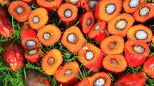 Prezzi in calo per l'olio di palma sui mercati e la Ferrero conferma che senza questo ingrediente non sarebbe possibile produrre la Nutella.