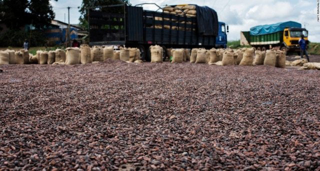 Prezzi del cacao tagliati del 36% per gli agricoltori della Costa d'Avorio, che rappresentano il 40% della produzione mondiale. La crisi di eccesso di offerta ha travolto le quotazioni internazionali.