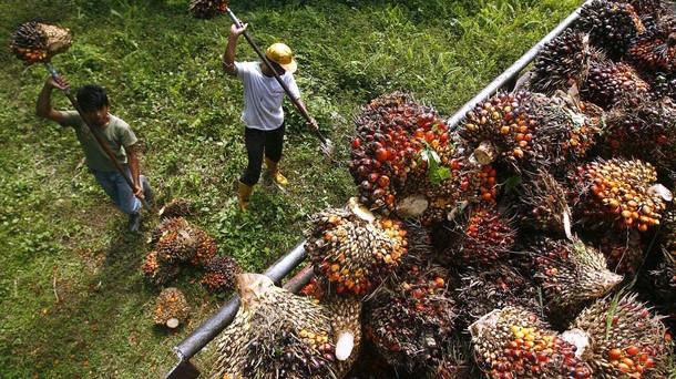 L'olio di palma crea più di una preoccupazione in Malaysia, secondo produttore al mondo. I timori riguardano l'immigrazione e le regole attese più restrittive nella UE.