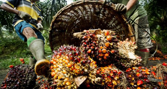 Fuga degli italiani dall'olio di palma