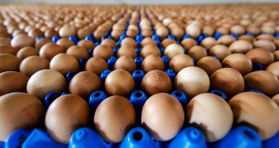 Uova al Fipronil, ancora casi in Italia: i rischi 'reali' per la salute, la profilassi e il mercato alimentare