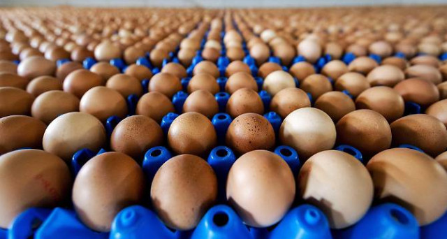 Dilaga lo scandalo delle uova contaminate al Fipronil: cosa sta succedendo, i rischi 'reali' per la salute, la profilassi e il mercato alimentare.