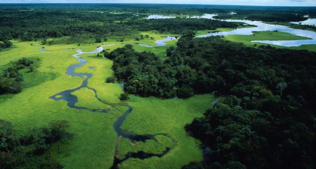 Via libera alle trivelle in Amazzonia, il più grande polmone verde del mondo. Per gli ambientalisti