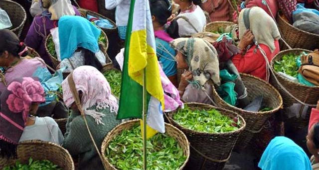 Il tè più pregiato potrebbe sparire presto dagli scaffali dei negozi, a causa di un lungo sciopero indetto dai coltivatori in India. E l'assenza rischia di durare anni.