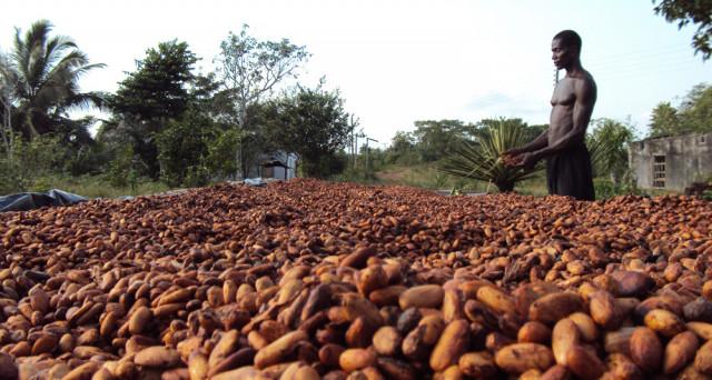 La produzione di cacao va in crisi in due economie africane, che rischiano di subire grossi contraccolpi dal crollo delle quotazioni.