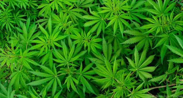 La Cannabis legale sarà il futuro dell'economia  e porterà ad un indotto d'oro?  I dati comunicano che lo scorso anno la cannabis ha fatturato 6,7 miliardi di dollari e ha fornito un impiego regolare ad oltre centomila persone in America.
