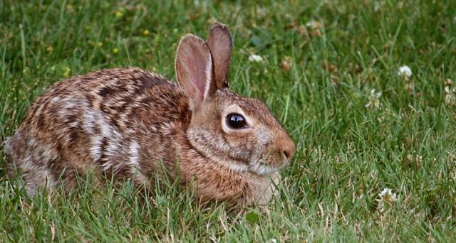 Non ha niente da mangiare? Alleva anche tu un coniglio. La risposta tragicomica del governo