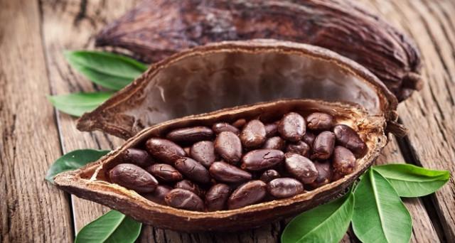 Cioccolato, la morte delle foreste della Costa d'Avorio e il dramma del lavoro minorile.