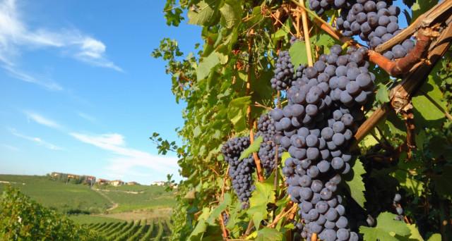 E' allarme clima impazzito, a rimetterci anche il vino e le produzioni che dovranno spostarsi andando a danneggiare gli eco sistemi.