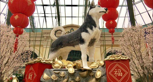 Inizia l'Anno del Cane domani in Cina, che apre un periodo di intense festività. Numeri imponenti sono smossi dall'evento, che avrebbe effetti persino sui prezzi dei Bitcoin.