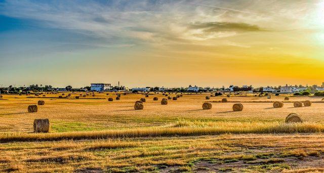 Sono gli stranieri a trainare il settore agricolo al Nord, senza di loro il Made in Italy rischierebbe di scomparire.