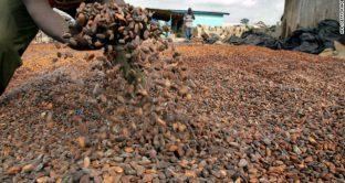 Il Natale avrà quest'anno un cacao meno dolce?