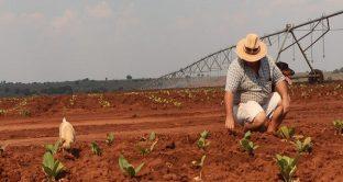 Iniziati gli espropri delle terre dei bianchi in Sudafrica