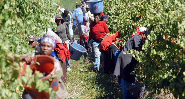 Il Sudafrica si accinge ad espropriare le terre ai bianchi senza indennizzo. La riforma della Costituzione rischia di provocare la stessa crisi devastante accusata dal vicino Zimbabwe.