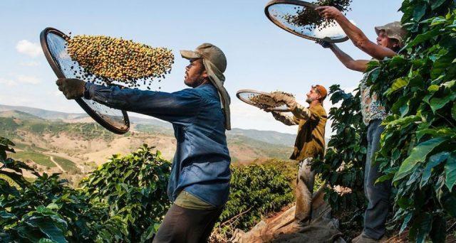 Le quotazioni del caffè crollano sul mercato internazionale e mandano su tutte le furie i produttori, specie in Colombia, dove minacciano di abbandonare le contrattazioni a New York per poter vendere i chicchi a prezzi superiori ai costi.