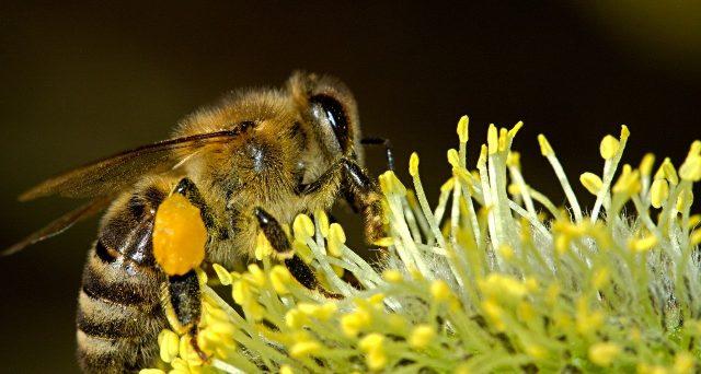 Secondo una ricerca di un gruppo di studiosi dell'Università di Milano, la produzione di miele è destinata a scomparire da qui ai prossimi cento anni.