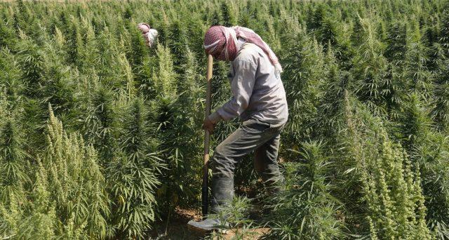 La cannabis in Libano non rende più