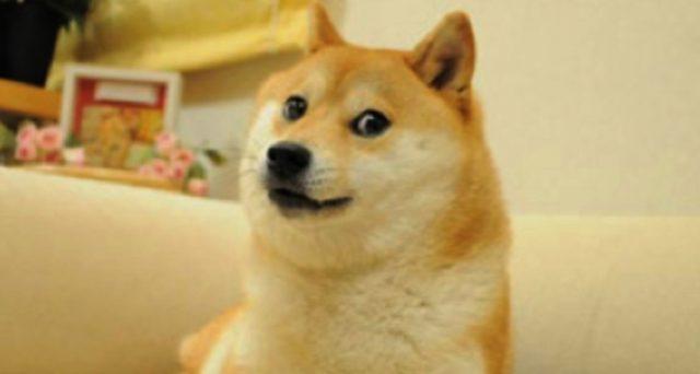 Dogecoin cane