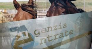 redditometro cavalli
