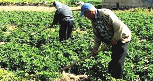 Un bracciante agricolo può accedere alla quota 41 se ha contributi versati prima dei 19 anni?