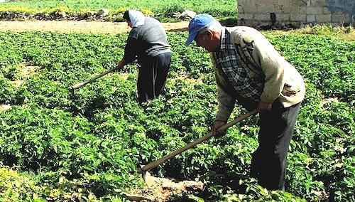 Voucher agricoli pensionati