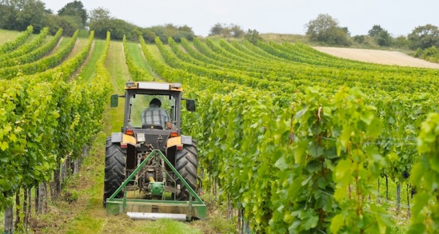 Nell'ultimo anno si è verificato un boom di giovani imprenditori, con un incremento del 32% per le nuove imprese agricole in Lombardia. I giovani hanno scelto