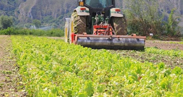 L'INPS mette a disposizione nel cassetto previdenziale, gli F24 dei contributi delle aziende agricole, la scadenza è il 18 settembre.