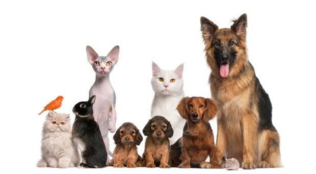 Ecco quali sono gli animali che, secondo la legge 221 del 28/12/15, non sono pignorabili in caso di debiti.
