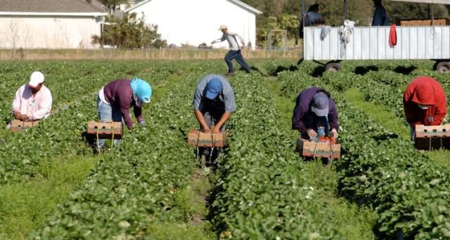 Niente versamento di contributi IVS all'Inps per due anni ai nuovi e giovani imprenditori agricoli. Previsti anche altri bonus in agricoltura per il 2020.