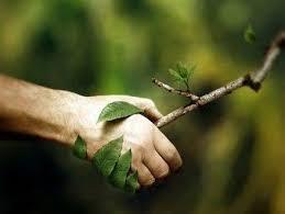 mani-green