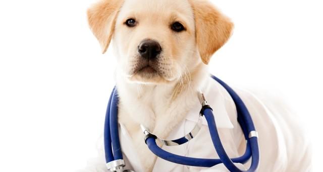 La Lega nazionale per la difesa del cane, denuncia l'elevato costo dei farmaci per gli animali, costi folli e ingiustificati.  Invita tutti a firmare la petizione, ecco dove e quando.
