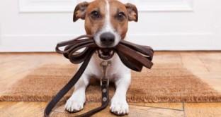 Intensificati i controlli nei parchi pubblici: ecco la multa per chi porta a passeggio i cani senza guinzaglio