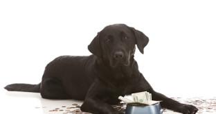 Tasse 2017 e animali domestici: cosa sapere su sconti Tari e detrazione spese veterinarie nel 730