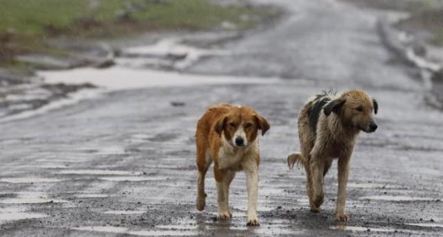 L'abbandono di animali comporta la multa fino a 10mila euro secondo la giurisprudenza.