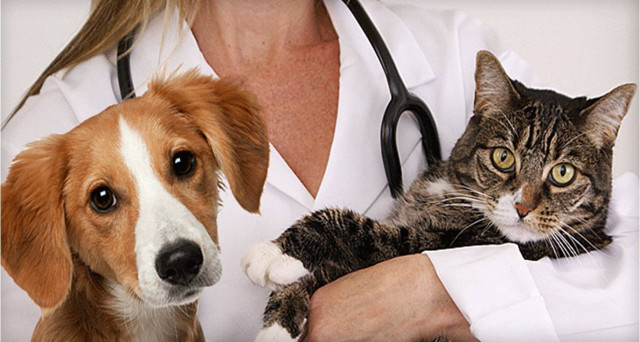 """In arrivo due importanti novità """"pet-friendly"""": Il tetto massimo per le detrazioni delle spese veterinarie aumenta fino a 500 euro; stanziato un milione di euro per la costituzione di un """"Fondo prevenzione randagismo"""". Vediamo meglio di cosa si tratta."""