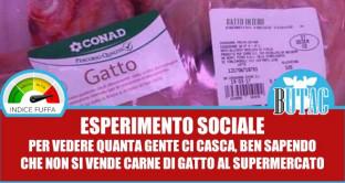 Carne di gatto in vendita al supermercato: bufala o orrore in Italia?