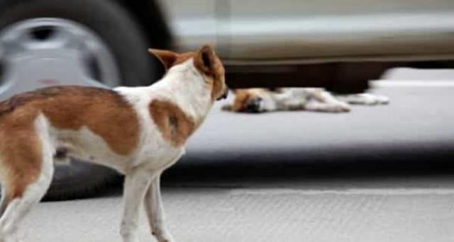 Chi investe un animale e non si ferma risponde di omissione di soccorso: ecco la sentenza e quale multa si rischia