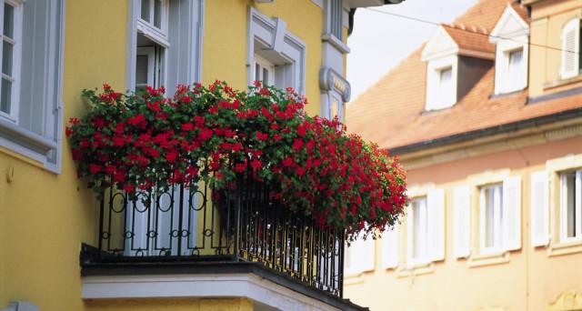 Ortensie Sul Balcone : Vasi sul balcone cosa succede se annaffiandoli si bagna