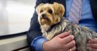 Cani e gatti sui mezzi pubblici, libero accesso, approvata la legge