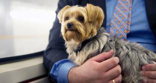 Un'azienda americana attua il congedo parentale per chi deve seguire gli animali domestici, due settimane di permessi per assecondare i bisogni del dipendente.
