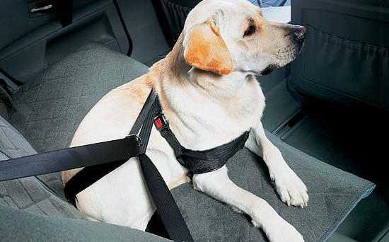 Come si deve viaggiare in auto con un animale domestico per evitare multe? Vediamo cosa stabilisce il Codice della Strada.