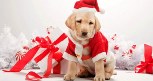 cucciolo-cane-regalo-natale-2-640×351