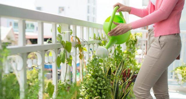 Bonus verde 2018 piante in vaso solo se abbinate ad for Solo piante