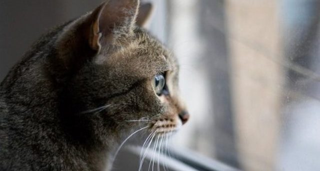 gatto_condominio