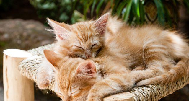 Boom di richieste per l'offerta lavoro per accarezzatore di gatti in Grecia, che requisiti servono?