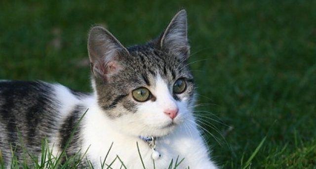 Cani e gatti che invadono il recinto e la proprietà del vicino di casa: è possibile il risarcimento? Quali tutele?